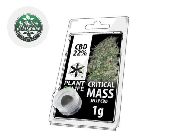 Résine Critical Mass CBD 22% - Plantoflife