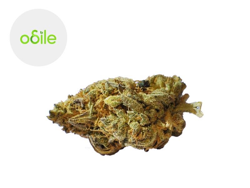Fleur Gold Kush CBD Indoor 4.3% - Odile Green