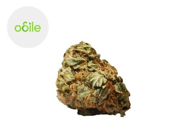 Fleur Orange Sunshine CBD Indoor 3.2% - Odile Green