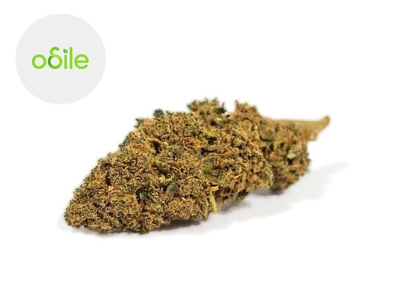 Fleur Black Diamond Kush CBD Indoor 1.7% - Odile Green