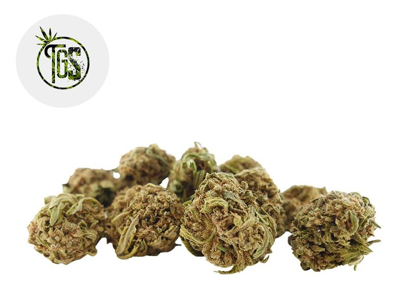 Fleur White Widow CBD Greenhouse 5% - The Green Store