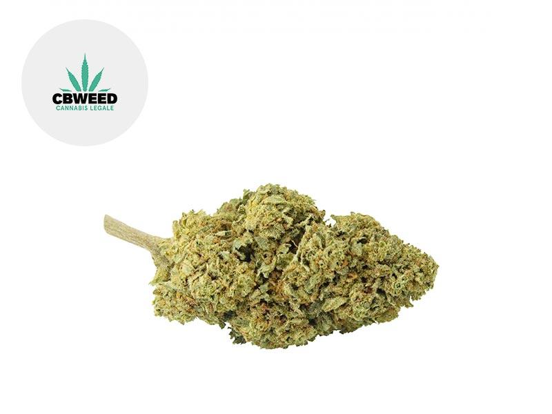 Fleur Critical Mass CBD Outdoor 6.5% - Cbweed