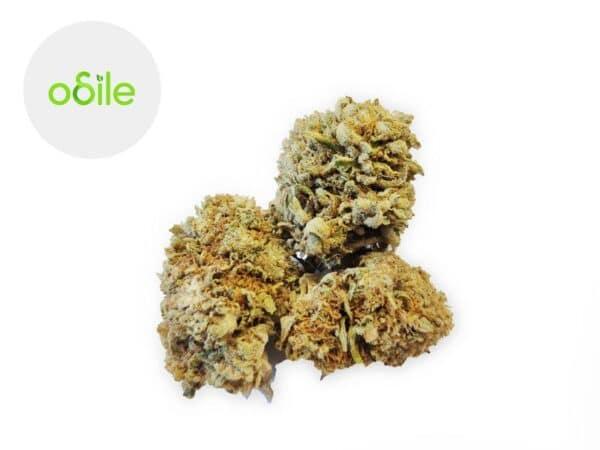 Fleur White Widow CBG Indoor 7.5% - Odile Green